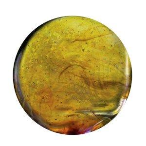 Exotic Citrus Yellow